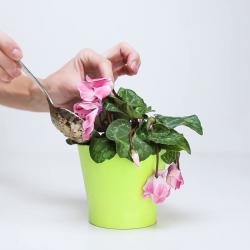 3 ингредиента, которые вернут жизнь любимому растению!