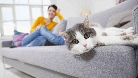Как избавиться от кошачьей шерсти повсюду