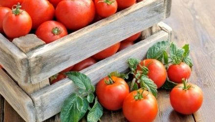 Бражка для урожая помидоров