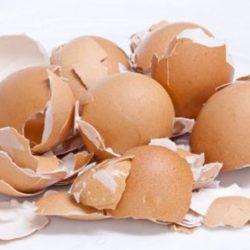 Лечебные свойства яичной скорлупы