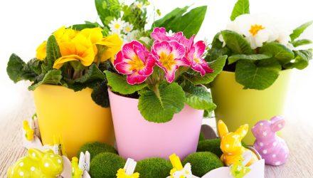 От Этого Средства Комнатные Цветы Растут Как Сумасшедшие!