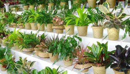 7 растений, с которыми можно забыть о поливе. Самые Удивительные!