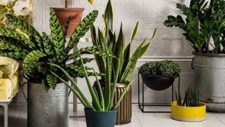 5 лучших растений для идеального микроклимата в доме