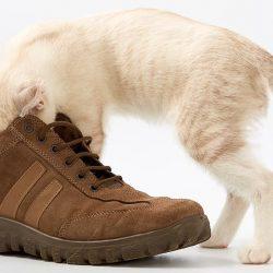 Как убрать неприятный запах в обуви
