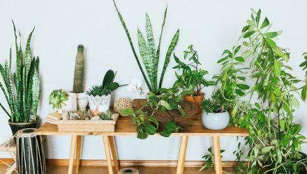 Опасные и полезные растения для дома