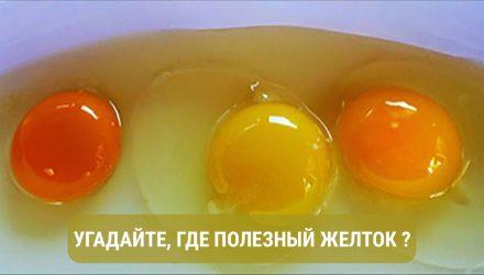 Узнай о том, какого цвета должен быть желток, если курица здорова!