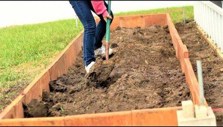"""От богатого урожая отбоя нету"""". Как оживить землю в огороде"""
