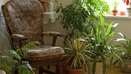 6 самых благоприятных для дома растений