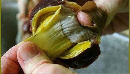 Плёнка куриных желудков-помогла избавиться от камней и кист в почках